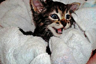 Cara Menghilangkan Jamur pada Kucing Secara Alami