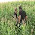 Trabalhador encontra cadáver em plantação da zona rural de Ibiporã