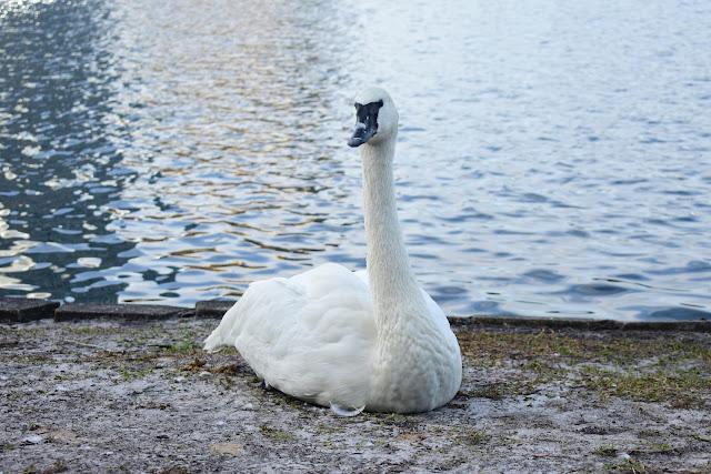 Pozdrowienia z Lake Eola Park