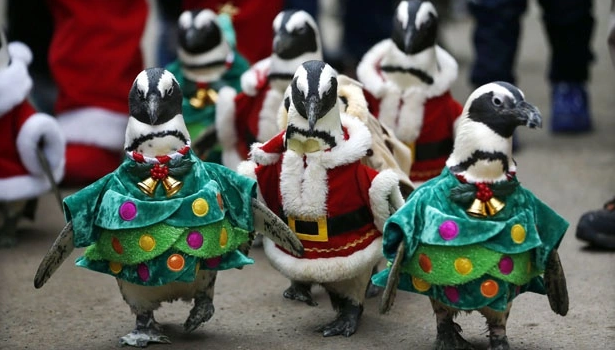 5 Keunikan Menyambut Natal Di Setiap Negara