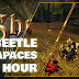 17 Beetle Carapaces in 1-HOUR (WTS Gothic Inn Village Home) • Shroud of the Avatar 2019