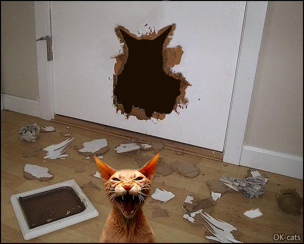 Photoshopped Cat picture • Crazy angry cat destroys the cat door and wants to kill his human, hahaha!