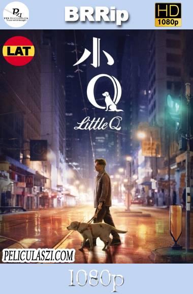 Little Q (2019) HD BRRip 1080p Dual-Latino