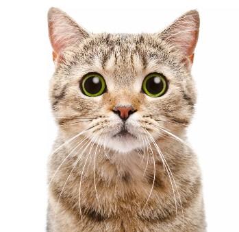 27 Arti Mimpi Melihat Kucing Menurut Primbon Jawa Terlengkap