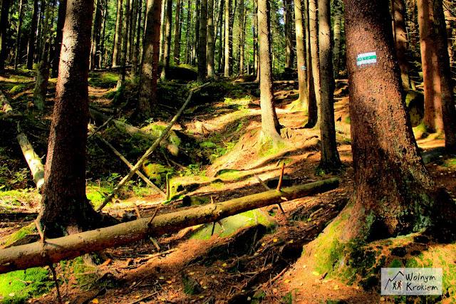 Skalne Grzyby Szlak zielony