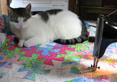 Cat helping me quilt