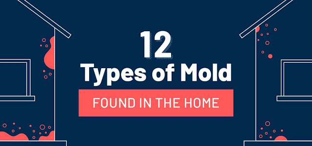 12 Common Types of Mold Found in the Home #infographic