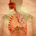 The Main Function and Structure Which You Must Know About Respiratory System