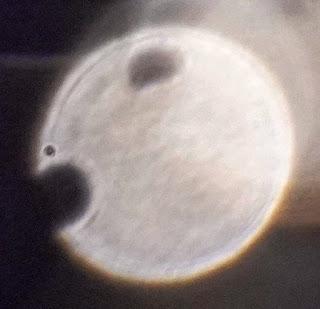 semicircular hole in orbs