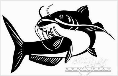 Buat anda yang sedang mencari panduan cara budidaya ikaln lele yang baik dan benar disini Cara Budidaya Ikan Lele Hingga Sukses