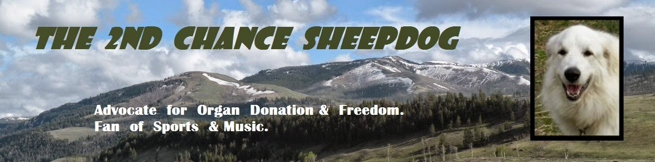THE SECOND CHANCE SHEEPDOG