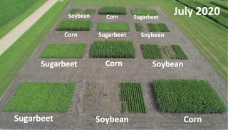 dairy manure cover crop soil health sugarbeet rotation Minnesota