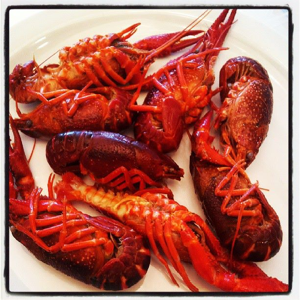 Crayfish Eggs – Daily Motivational Quotes