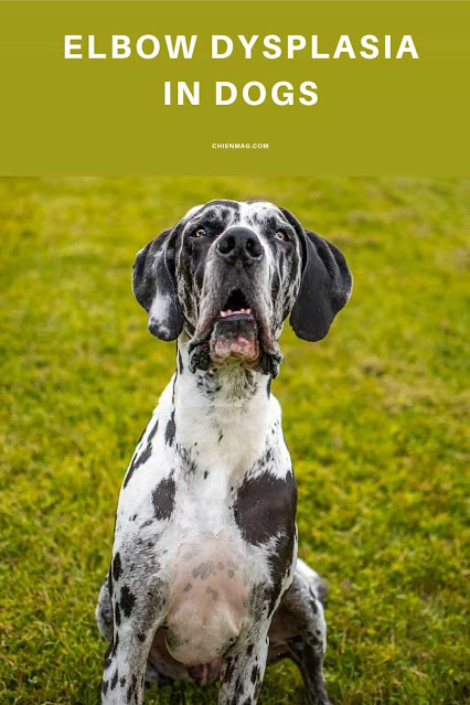 elbow dysplasia in dogs treatment