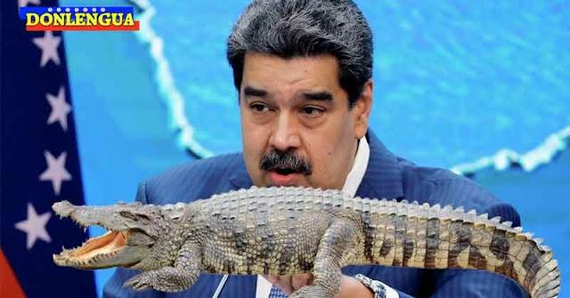 Maduro anunció que se desbordo el río Neverí y que hay muchos cocodrilos en las calles