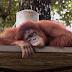 Haiwan Zoo Negara ingin tunjuk gelagat mereka secara maya!