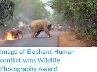 https://sciencythoughts.blogspot.com/2017/11/image-of-elephant-human-conflict-wins.html