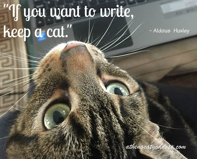 If you want to write keep a cat