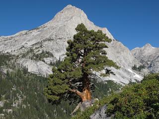 Felsen und Bäume - die wichtigsten Elemente dieser Landschaft