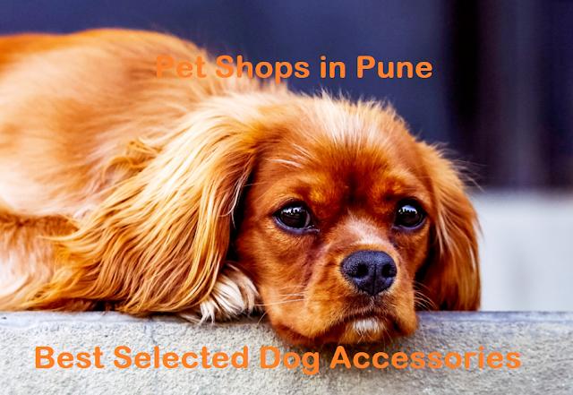 pet shop near me pune, pet shops in pune camp, pet shop near me dog price, delight pet shop,dog shop in pune, pune dog shop, lebra price in pune