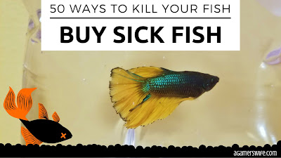 Aim to buy happy, healthy fish from your pet store