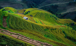 Sapa – Mu Cang Chai – Hagiang Terraced Field Trail 9Days 8Nights 2