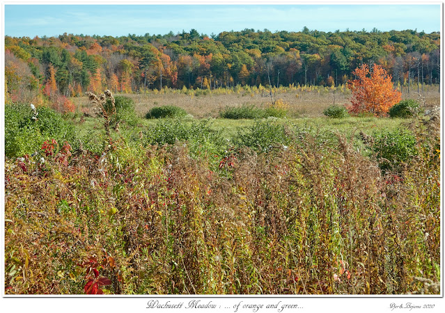 Wachusett Meadow: ... of orange and green...
