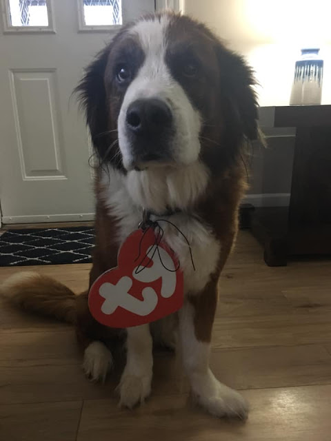 DIY TY dog costume Halloween