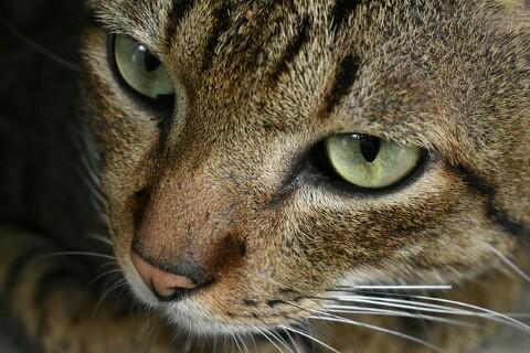 Cara Mengatasi Kucing Stres Beserta Penyebab Dan Tanda