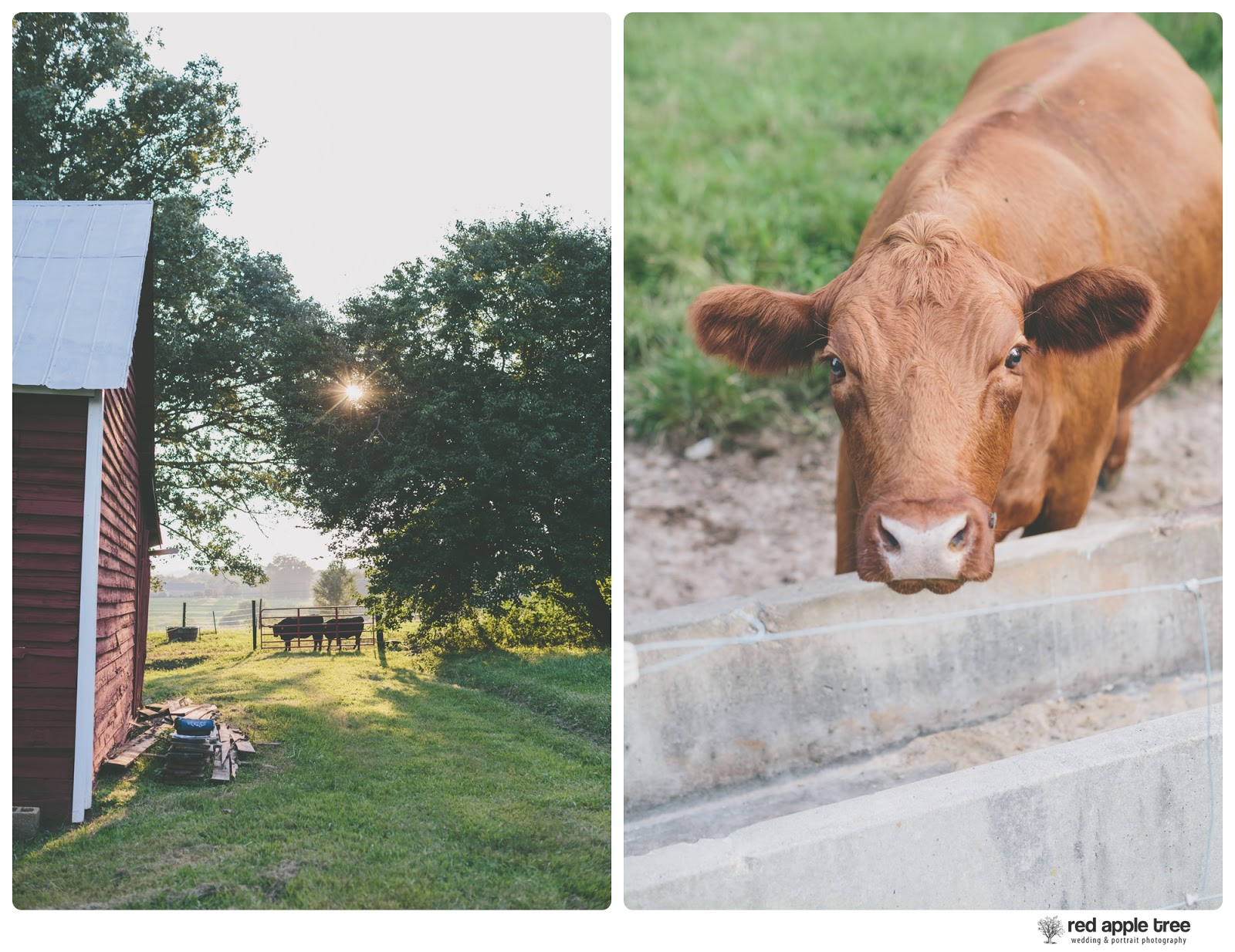 Heather + Travis's Engagement | Famoda Farms | Greenville