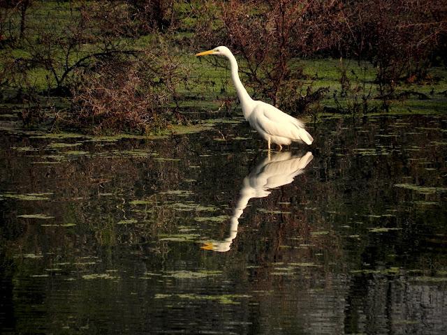 Keoladeo Ghana National Park Bharatpur