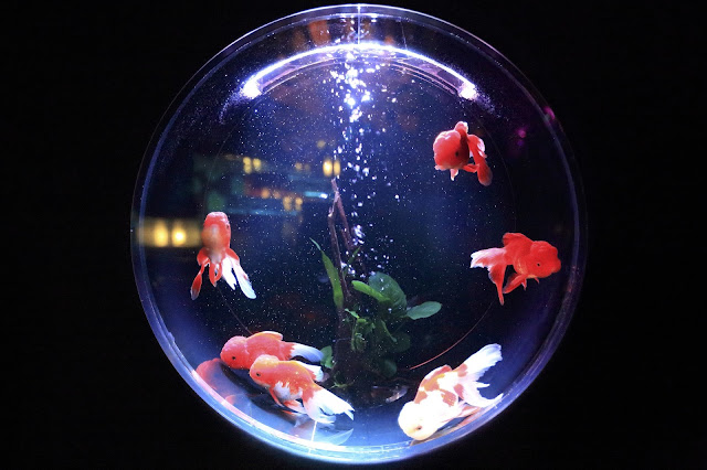 "Alt=""God fishes are fantastic pets"