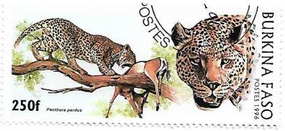 Selo Leopardos e a caça