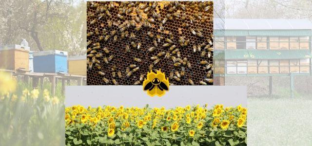 Uzbekistan's Bee Keeper highest graph on Beekeeping