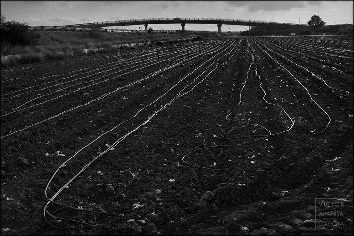 fotografia,cultivo,murcia,fuente_alamo,tuberias,riego,goteo,paisaje