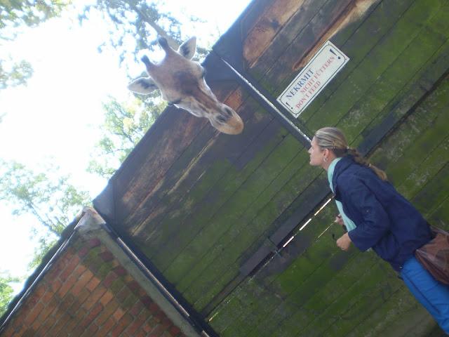 Linda a žirafa na sebe koukají (ZOO Liberec)