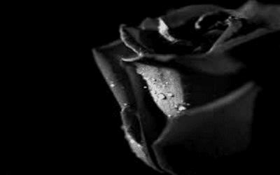 Puisi sang mawar hitam