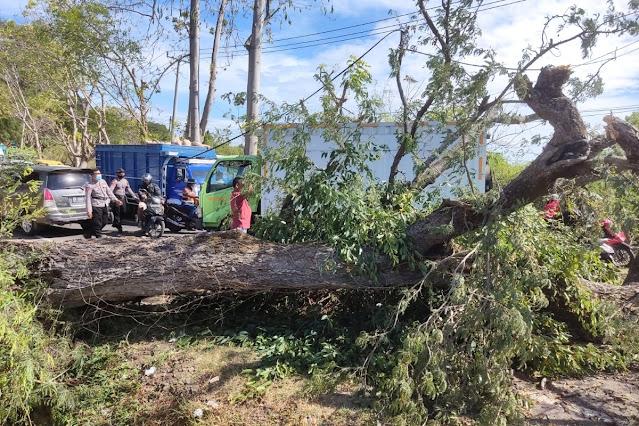 Angin kencang, pohon tumbang tutup akses jalan Sumbawa-Tano