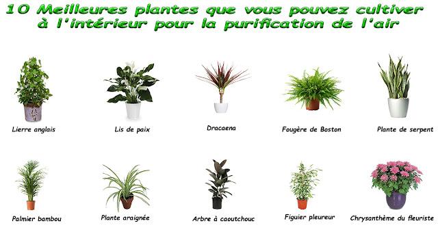 10 Meilleures plantes que vous pouvez cultiver à l'intérieur pour la purification de l'air