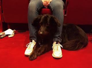 Wilka ligt onder de theaterstoel en steekt haar kop tussen Doreens benen door