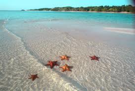 Bir Deniz Yıldızı Hikayesi 2