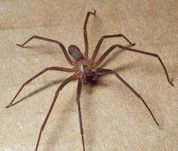 الخطر انواع  العناكب -Serious-types-of-spiders