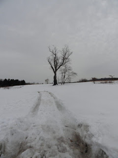 A large black tree in this distance in a snowy field - the Basking Rige Devil's Tree.