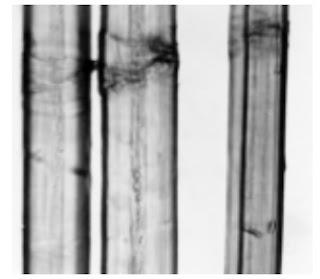 Longitudinal-View-500X-flax-fibre