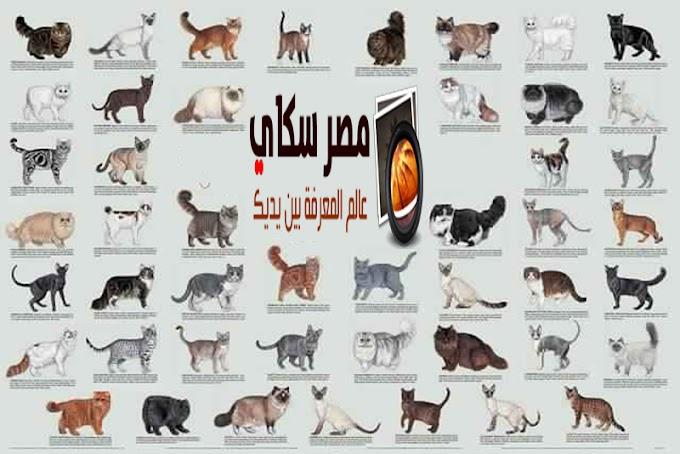 تعرف على أنواع وألوان القطط المستأنسة Types the cats