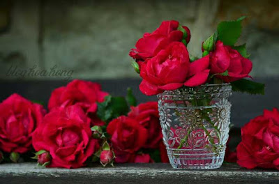 cắm hoa bằng nước sạch sẽ tươi lâu hơn