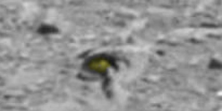 nasa rover spots claw of living alien on mars - 710×358