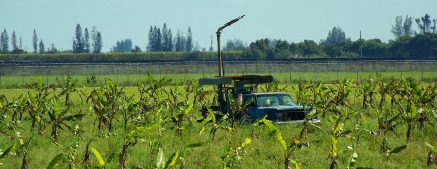 En los campos de cultivo de la orilla este del canal
