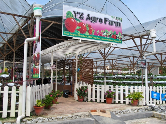 Tempat menarik di Cameron Highland YZ Agro Farm Cafe