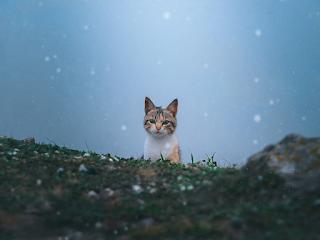 cat-sounds